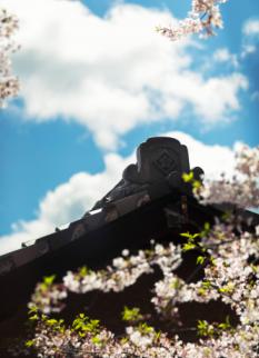 古き良き日本の春景色
