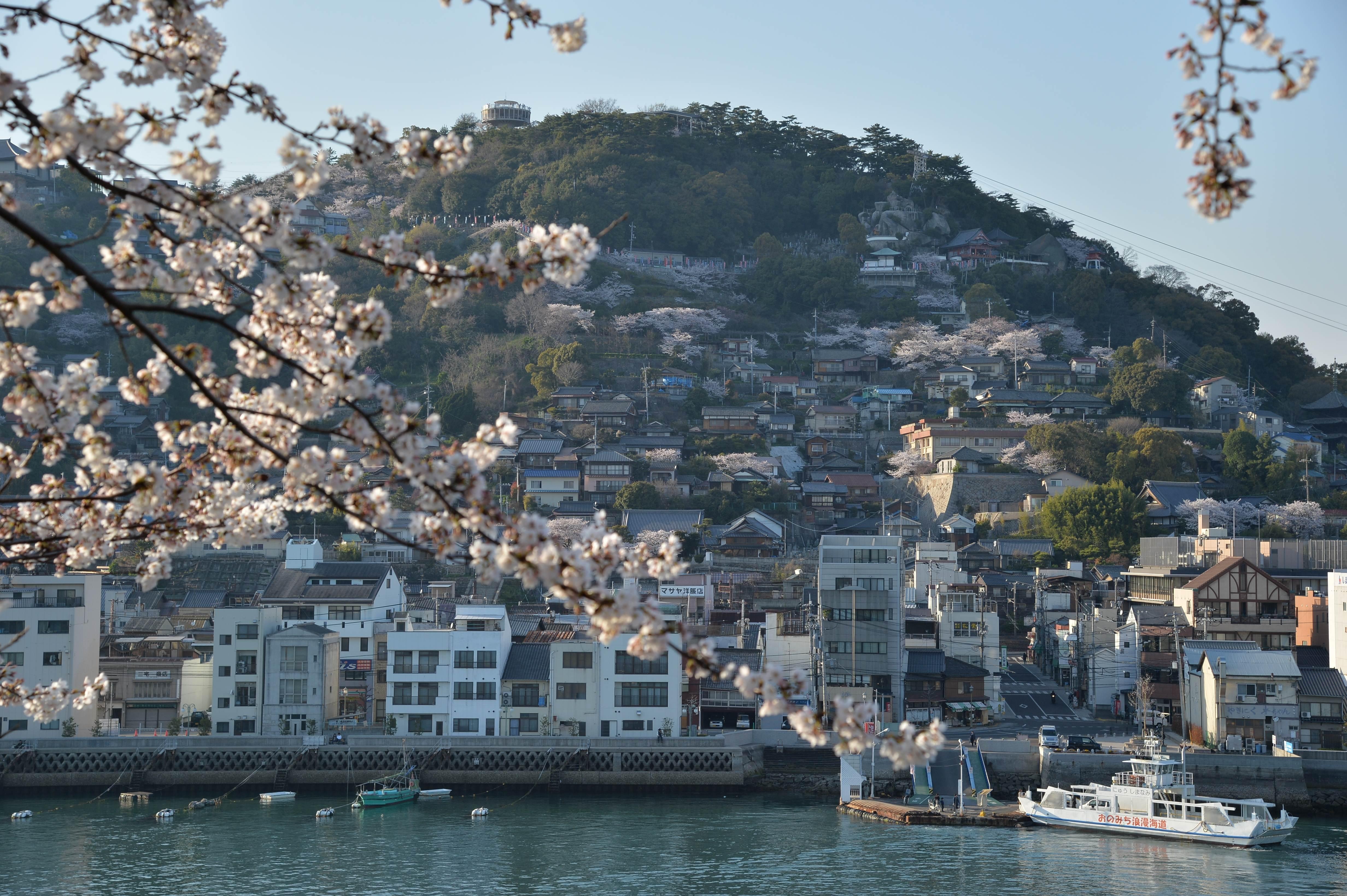 開花間近。尾道で「日本三大桜」子孫樹のお花見と、一棟貸の町家でゆったり過ごす春の休日。せとうち 湊のやど