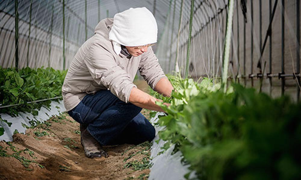 農家や大工、住職など多種多様な職業の人がワークパンツとしてデニムを穿く。